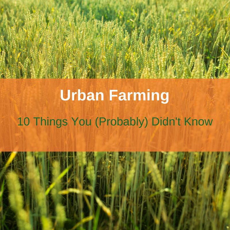Urban Farming-Square
