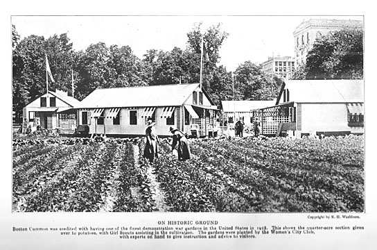 The war garden at Boston Common was a demonstration project that showed the success of urban farming during the war.